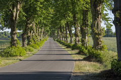 Picturesque lime tree alley in East Germany Royalty Free Stock Photo