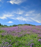 Picturesque mountain flowering meadow - colorful summer landscape stock image