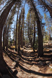 Picturesque Mountain Footpath Inl Park Yosemite. Royalty Free Stock Image