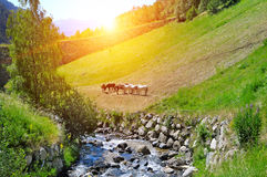 picturesque mountain valley, the river and the sunrise Royalty Free Stock Photo