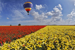 Picturesque multi-coloured balloon Stock Photography