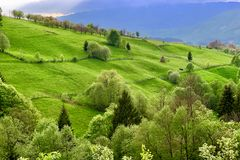 Picturesque natural landscape of green grass meadows. Forest, trees, in a rural mountain area in the Carpathian Mountains, Romania. Atmosphere of calm royalty free stock photo