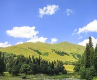 Picturesque natural sunny landscape of green alpine meadows. Panorama of mountain and the forest at foot of blue sky and clouds stock images