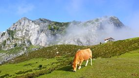 Picturesque nature landscape with cow. Royalty Free Stock Photo