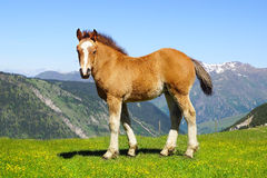 Picturesque nature landscape with foal. Stock Photo