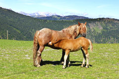Picturesque nature landscape with horse and foal. Stock Images
