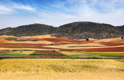 Picturesque nature rural landscape with fields. Stock Image