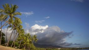 Attractive picture of wonderful palm trees on the ocean shore and mountains mauna loa with active crater of volcano with. Picturesque oceanscape with exotic stock video