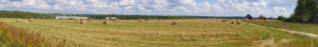 Picturesque panoramic view of the green grassy sown meadow at the woodside under the blue sky. Moscow region, Russia. Beautiful panoramic view of the green Royalty Free Stock Photo