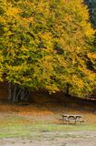 Picturesque park in autumn. Scenic view of picnic bench in park with large, leafy autumn tree in background stock image