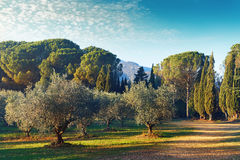 Picturesque park of Lourmarin. Spain. Picturesque park of Lourmarin. Provence-Alpes-Cote d`Azur. France Stock Images
