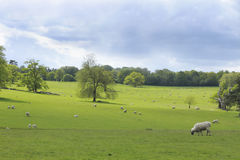 A picturesque pastoral scene Royalty Free Stock Photography
