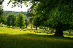 Picturesque pastures with sheep, Scotland, UK Royalty Free Stock Photos