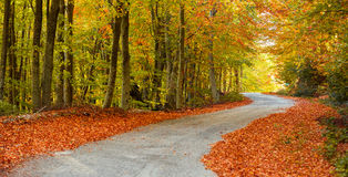 Picturesque path Royalty Free Stock Image