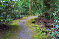 Picturesque path in forest, park Royalty Free Stock Image