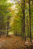 The picturesque path. The picturesque path hidden in a beautiful autumn forest Stock Image