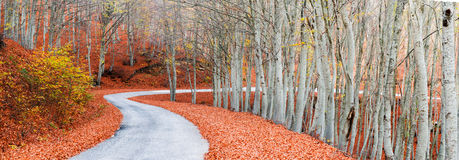 Picturesque path. A panoramic view of a picturesque path during autumn Stock Images