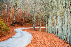 Picturesque path Stock Photo