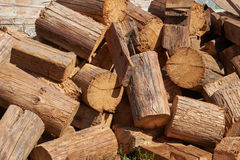 The picturesque pile of wooden chump from old logs. The logs are damaged by larvae butterfly carpenter. Background Stock Image