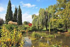The picturesque pond Royalty Free Stock Photos