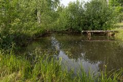 A picturesque pond with a bridge among the green thickets. On a Sunny summer morning royalty free stock photography