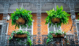 Picturesque private houses in the French Quarter. Balcony and wrought iron grating. Traditional architecture of old New Orleans Royalty Free Stock Photo