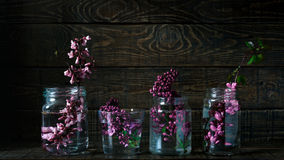 Picturesque purple spring flowers in glass vases bottles standing in a row on a dark wooden background with space. Flat style Royalty Free Stock Photos