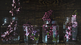 Picturesque purple spring flowers in glass vases standing in a row on a dark wooden background. Close up Royalty Free Stock Photos