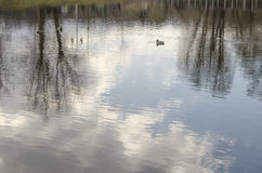 A picturesque reflection of the sky in the water. With floating ducks Royalty Free Stock Images