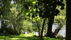 Picturesque river view. Lovely view on the trees waving in the wind and the river on a summer day stock video footage