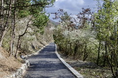 Picturesque road at Lozen mountain in springtime cloudy day Stock Photos