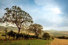 Picturesque rural landscape Stock Photos