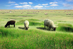 Picturesque rural landscape Stock Photo