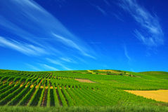 Picturesque rural landscape. Royalty Free Stock Photos