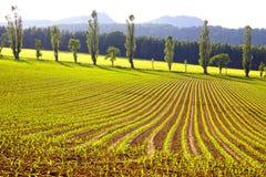 Picturesque rural landscape with plantation. Stock Photos