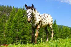 Picturesque rural mountain landscape with foal. Royalty Free Stock Photos