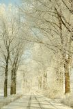 Picturesque rural track in the winter Royalty Free Stock Image