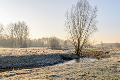 Picturesque rural winter landscape early in the morning Royalty Free Stock Photo