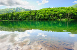 Picturesque scenery with forest lake Stock Photo