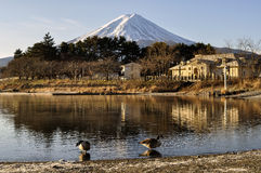 Picturesque scenery of Mt Fuji, two swans by the pond stock images