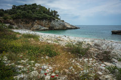 Picturesque sea landscape with flowers in the foreground, Pelion Royalty Free Stock Images