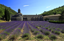 Picturesque Senanque Abbey with Lavender Field Royalty Free Stock Photo