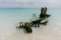 The picturesque snags sticking out of the waters of the Caribbean Sea the beach of the island of Cayo Largo, Cuba Stock Photo