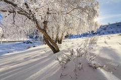 Picturesque snowy landscape with frosted trees Royalty Free Stock Photos