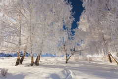 Picturesque snowy landscape with frosted trees Royalty Free Stock Images