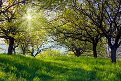 Picturesque spring garden background. Fresh leaves on trees and Royalty Free Stock Photography
