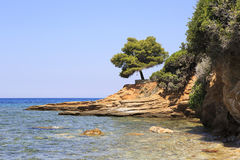 Picturesque stone beach with vegetation. Royalty Free Stock Photo