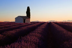 Picturesque stone built skack in Lavender Field Royalty Free Stock Images