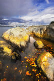 Picturesque  stones on coast Stock Image