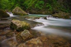 Picturesque stream Stock Image